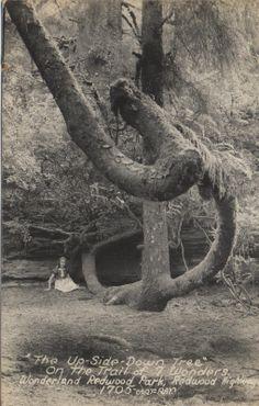 1930's Postcard.Hagins collection.