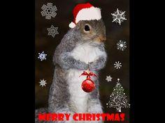 Squirrel Xmas