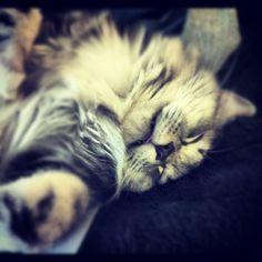 #molly #cuteness