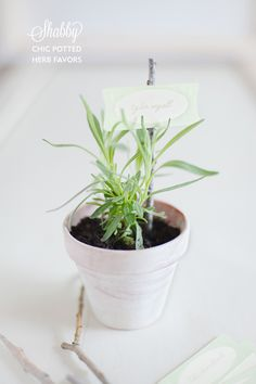 These potted plant DIY #wedding favors is such a great idea! http://ruffledblog.com/shabby-potted-herb-diy/  DIY by http://alisaevents.com/ Photo Credit: http://rebeccahollisphotography.com/