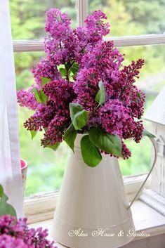 Aiken House & Gardens: Lilacs and Garden Vignettes