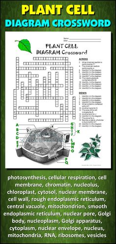 cell foldables plant and animal cells mccarter biology muscles of the body crossword muscles of the body crossword muscles of the body crossword muscles of the body crossword