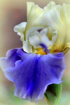 Cứu Dữ Liệu Trần Sang | Beautiful Flower