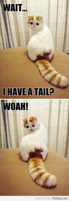 Wait... I Have A Tail? Woah!