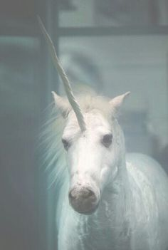 i used to believe in unicorns before they were cool