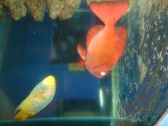 peixe..