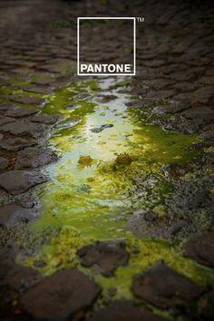 PANTONE Rain Edition by Matteo Gallinelli and Giuliano Antonio Lo Re
