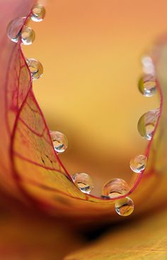 ♂ Beautiful nature water drop orange leaf bokeh photography