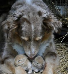 We All Need Somebunny To Love!