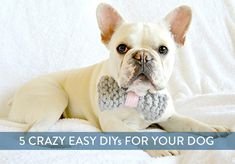 5 super easy DIY projects for your dog.