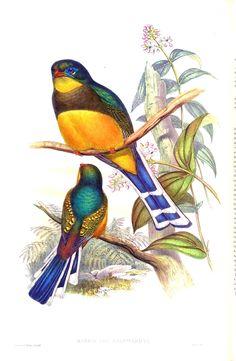 aves de asia s. javier magdaleno