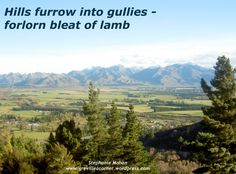 Hills and lambs - haiku poetry - New Zealand countryside