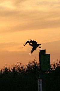 Bayou La Batre, AL ... Sunset
