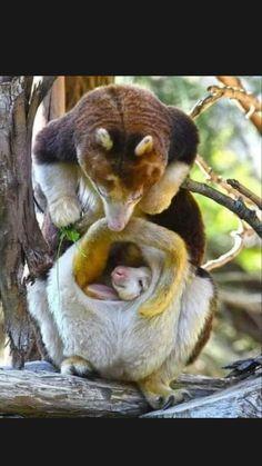 Cute Funny Animals, Cute Baby Animals, Nature Animals, Animals And Pets, Wild Animals, Beautiful Creatures, Animals Beautiful, Photo Animaliere, Unusual Animals