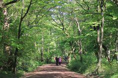 사려니숲  가족