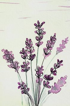 Watercolor Flowers Discover Lavender Illustration This loose style illustration of lavender is part of an alphabet style study in watercolor and ink. Letter L and Lavender. Watercolor Design, Watercolor And Ink, Watercolor Flowers, Simple Watercolor Paintings, Watercolors, Abstract Watercolor Art, Watercolor Journal, Watercolor Sunflower, Watercolor Ideas