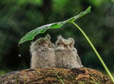 By YensenTan (TantoYensen)  Under The Rain Jakarta Indonesia.