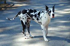 Service Dog Project Photos & Videos EXPLORE.ORG