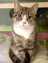 Adopt pretty girl, Sonya http://www.petfinder.com/petdetail/22345002. I wish we were allowed pets in the dorm.