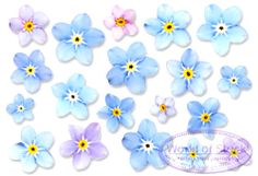 Abstracted Forget Me Not Flowers On White Background Stock Photography