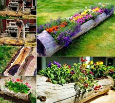 Turn an old log into a fantastic garden planter