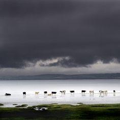 Loch Indaal, Islay, Scotland
