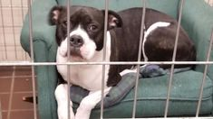 Shelter Dogs Relax in Donated Armchairs to Keep Stress Levels Down
