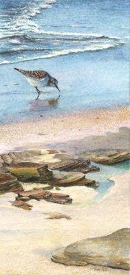 sanderling.jpg (189×400)
