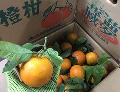 青果物の流通  ソーシャルメディアアグリ「地場活性化」のために: 年末商材/その⑥ 「橙(だいだい)」