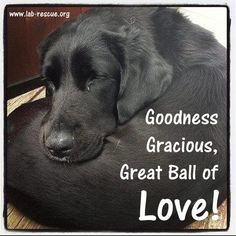 #labs www.lab-rescue.org