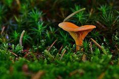 Free Image on Pixabay - Forest, Moss, Autumn, Mushroom Free Pictures, Free Images, Dandelion, Stuffed Mushrooms, Autumn, Landscape, Nature, Flowers, Plants