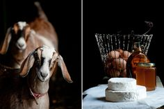 From a beautiful magazine I just found - Kinfolk. Goats of Valley View Farm, Ma. Nubian Goat, Kinfolk Magazine, Milk And Cheese, Goat Cheese, Future Farms, Living Off The Land, Valley View, Prop Styling, Farms Living