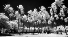 Infrared Photography by Kelly Fitzgerald