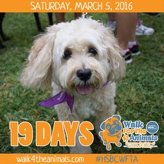 Walk for the Animals Countdown