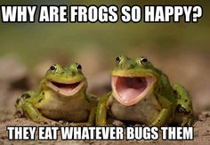 Why are frogs so happy??