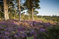 Blackdown in Haslemere, Surrey. Great British countryside!