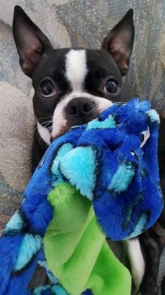 Don't touch my blankie