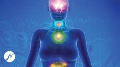 Adrenal Glands, Pineal Gland, Youtube, Thyroid, Yoga Meditation, Lava Lamp, Digimon, Gallery, Health