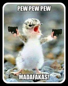 #pewpewpew