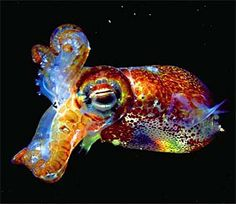 Luminous squid in deep water