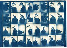Cyanotype print of onions by niekuo