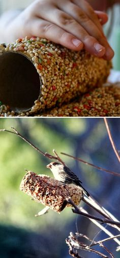 Cover a toilet paper tube in peanut butter and roll in bird seed. Then just slide it on a branch. Sun Butter or non-allergen butter can work as well in the winter.