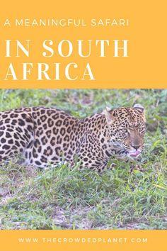 Meaningful safari in South Africa, volunteering in Kruger South Africa and South Africa wildlife