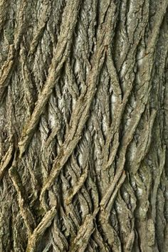 Tree bark pattern. find your inspiration visiting www.i-mesh.eu and click I-LIKE on FACEBOOK: https://www.facebook.com/pages/I-MESH/633220033370693