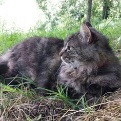 Con un modello così tutte le foto sono un'opera d'arte ♡♡♡    #BuonWeekend a tutti  da me e da #Tony ♡    Dolci Sogni a-mici !  #Buonanotte !   #Goodnight #Sleeptime #sleep   #weekend #happyweekend #catsofinstagram #cats #instacat #cutecats #sweetcats #lovelovelove #lovecat @animals_captures #animal_captures @_RSA_Nature #RSA_nature #cats #pets #animals #photooftheday #ilovemycat #nature #catoftheday #lovecats   #catsmylove #gatti #ioamoglianimali #MIAO :-)