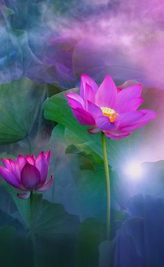 Lotus Flower Pictures, Happy Birthday Wallpaper, Buddhism, Flowers, Plants, Color, Pictures Of Flowers, Beautiful Flowers, Beautiful Images