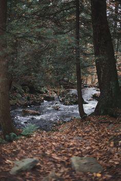 """kellyelainesmith: """" rickett's glen state park, pa . kelly smith photography """""""
