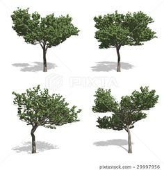 Stock Photo - StonePine trees, isolated on white background Pop Up, Find Image, Royalty Free Stock Photos, Trees, The Incredibles, Illustration, Plants, Popup, Tree Structure