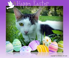 Odin is hoping for an #Easter egg hunt at www.catwisdom101.com