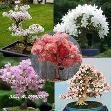 20 unids 5 tipos japonés sakura semillas Bonsai tree, Bonsai semillas de flores de cerezo, DIY hogar y jardín, envío gratis(China (Mainland))